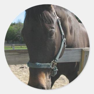 Dark Bay Thoroughbred Horse Stickers