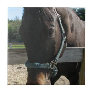 Dark Bay Thoroughbred Horse Tile