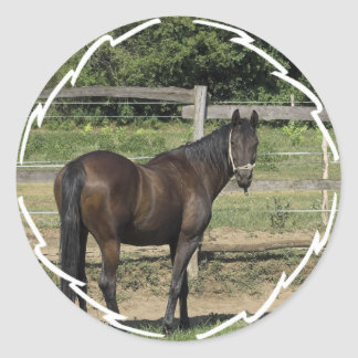 Dark Bay Thoroughbred Stickers