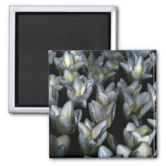 Dark Beauty 2 Inch Square Magnet