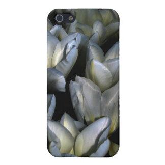 Dark Beauty iPhone 5 Cases