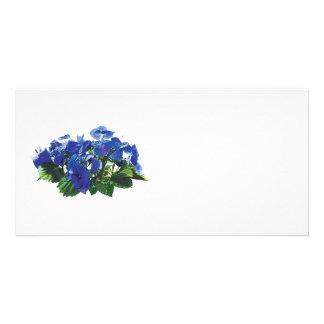 Dark Blue Hydrangea Lace Cap Photo Card