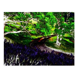 dark bright 1 postcard