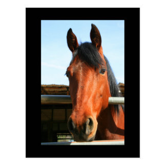 Dark Brown Horse Postcard