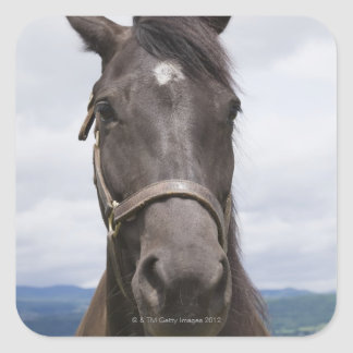 Dark Brown Horse Square Sticker