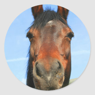 Dark Brown Horse Sticker