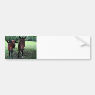 Dark brown Horses on pasture Bumper Sticker