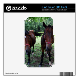 Dark brown Horses on pasture iPod Touch 4G Skin