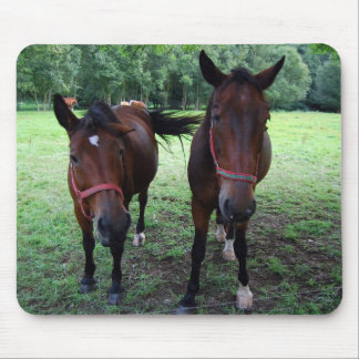 Dark brown Horses on pasture Mouse Pad