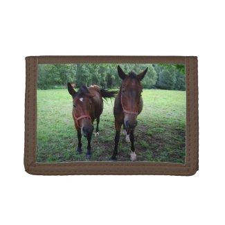 Dark brown Horses on pasture