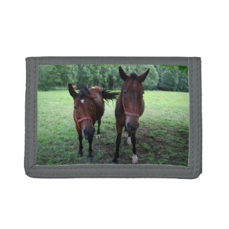 Dark brown Horses on pasture