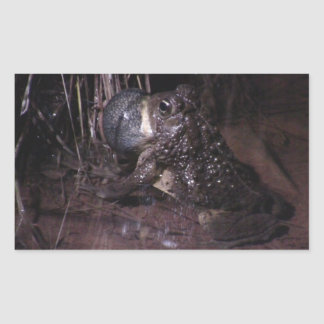 Dark Canyon Utah Aquatic Animals Plants Frog Stickers