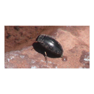 Dark Canyon Utah Insects / Arachnids Photo Cards