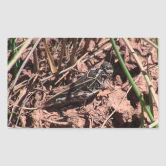Dark Canyon Utah Insects Arachnids Sticker