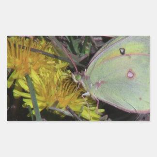 Dark Canyon Utah Insects Arachnids Stickers