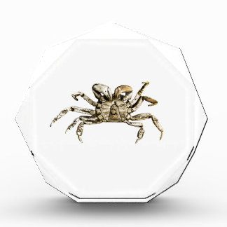 Dark Crab Photo Award