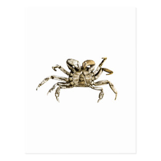 Dark Crab Photo Postcard