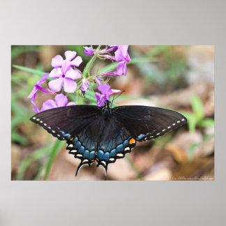 Dark Eastern Tiger Swallowtail Wildflowers Poster