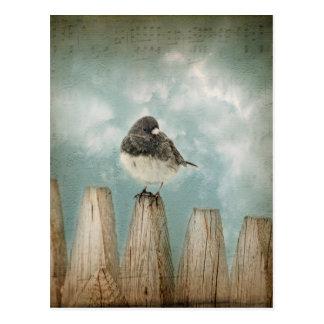 Dark eyed Junco Bird Postcard