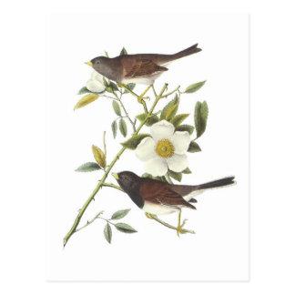 Dark-eyed Junco by Audubon Postcard