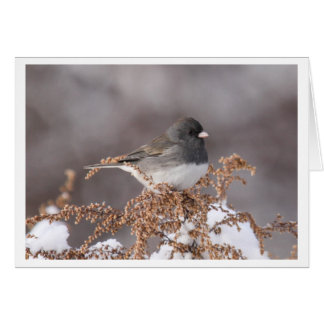 Dark-eyed Junco Card