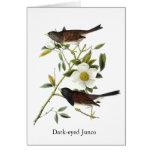 Dark-eyed Junco - John James Audubon Card