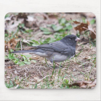 Dark-eyed Junco Mouse Pad