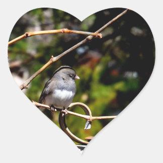 Dark-Eyed Junco Sparrow on Branch Heart Sticker