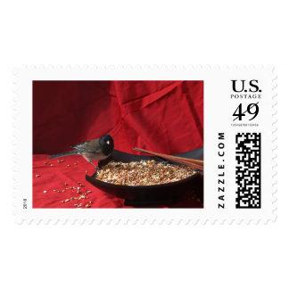Dark Eyed Junco Stamp