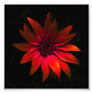 Dark Flower Print - Red Photographic Print