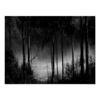 Dark Forest, Black and White Poster