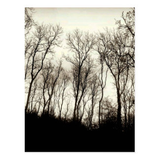 Dark forest postcard