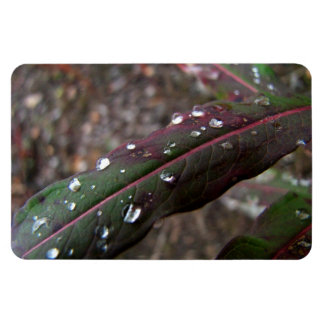 Dark Green Fireweed Leaf with Water Droplets Magnet