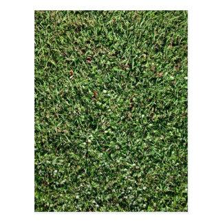 Dark Green Grass Texture Postcard
