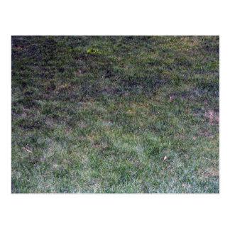 Dark Green Grassy Background Postcard