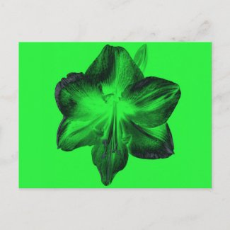 Dark Green on Light Green Amaryllis zazzle_postcard