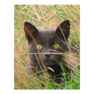Dark Grey Cat Peeking out from Tall Grass Letterhead