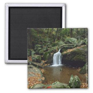Dark Hallow Falls in autumn , Shenandoah Fridge Magnet