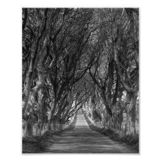 dark hedges distance art photo