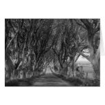 Dark Hedges in Black and White Stationery Note Card