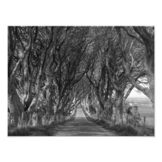 Dark Hedges in Black and White Photo Print