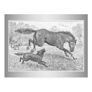 Dark Horse and Dog Postcard
