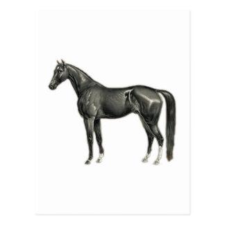 Dark Horse - Vintage Horse Illustration Postcard