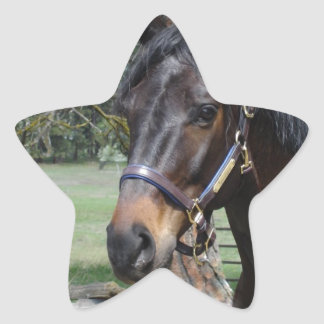 Dark Lipizon Horse Star Sticker