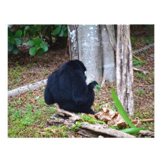 dark monkey in grass back image full color flyer