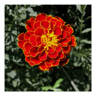 dark orange marigold poster