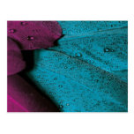Dark Orchid and Teal Plumage Postcard