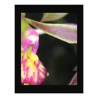dark orchid flyer