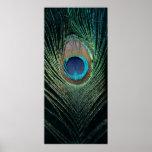Dark Peacock Feather Still Life Print