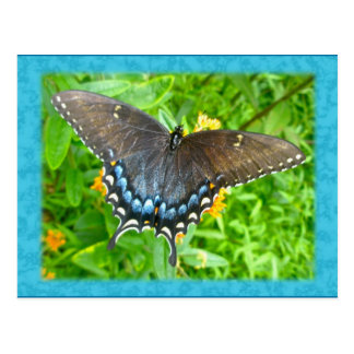 Dark Phase Tiger Swallowtail Butterfly Items Postcard